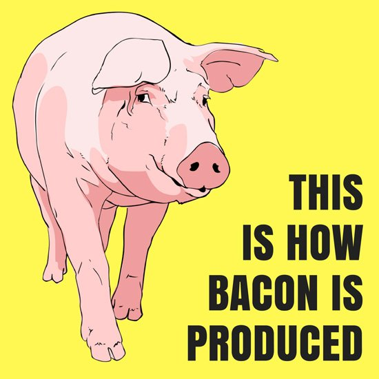 Industrial Pig Farming - This is how bacon is produced nowadays | hurrythefoodup.com