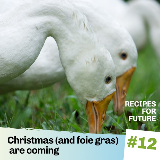 Christmas (and foie gras) are coming – Recipes for Future #12